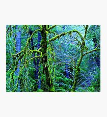 Heart of The Forest, Northern California Photographic Print