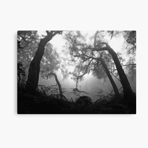 Forêt brumeuse Impression sur toile