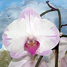 Orchid by Chere Lei