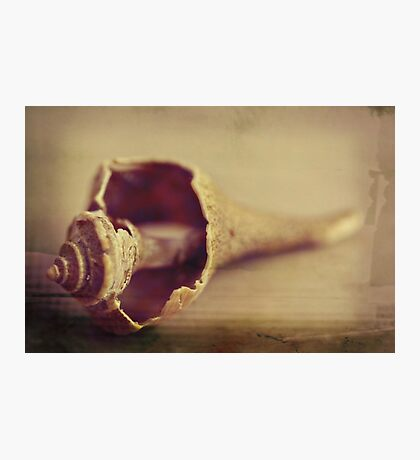 conch~ Photographic Print
