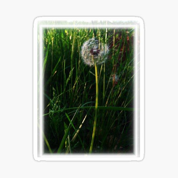 The Dandelion's Wish of Perhaps Sticker