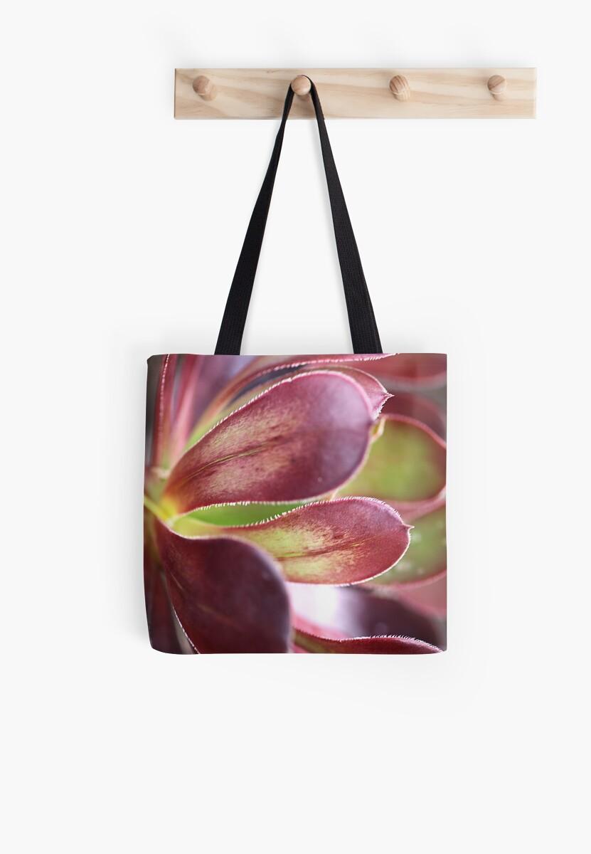Purple Aeonium by Joy Watson