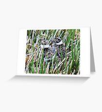 Lapwing Chicks -  Vanellus vanellus Greeting Card