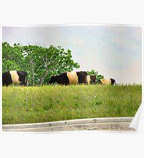 Oreo Cattle Poster