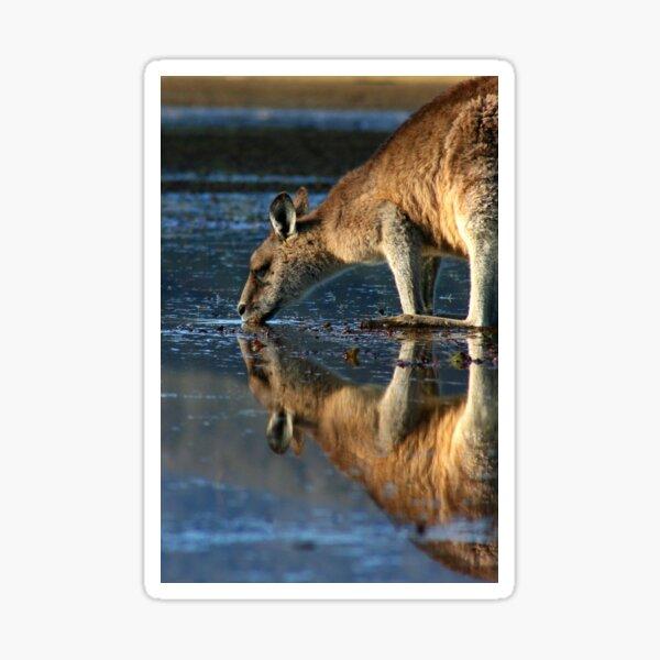 Eastern Grey Kangaroo Drinking Sticker