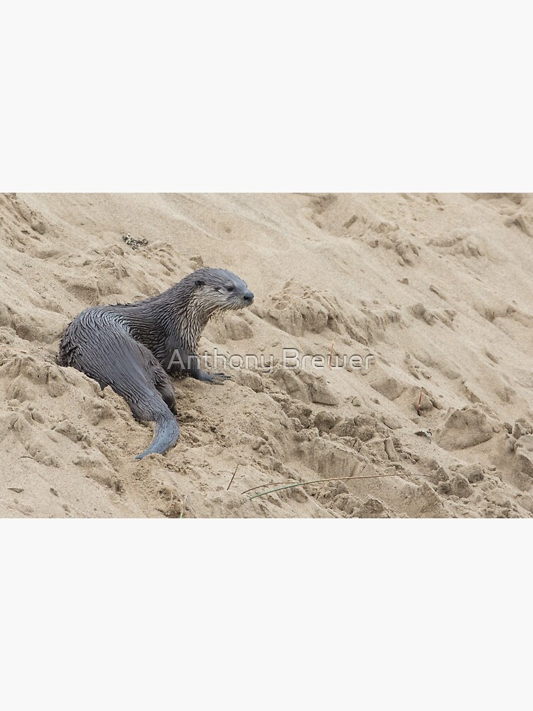 The otter's spot by dailyanimals