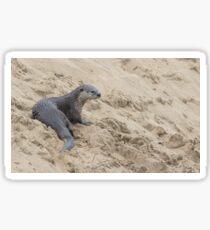 The otter's spot Sticker