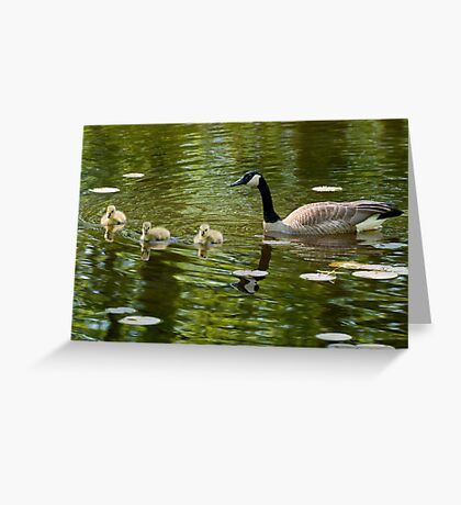 Mom and Goslings Greeting Card