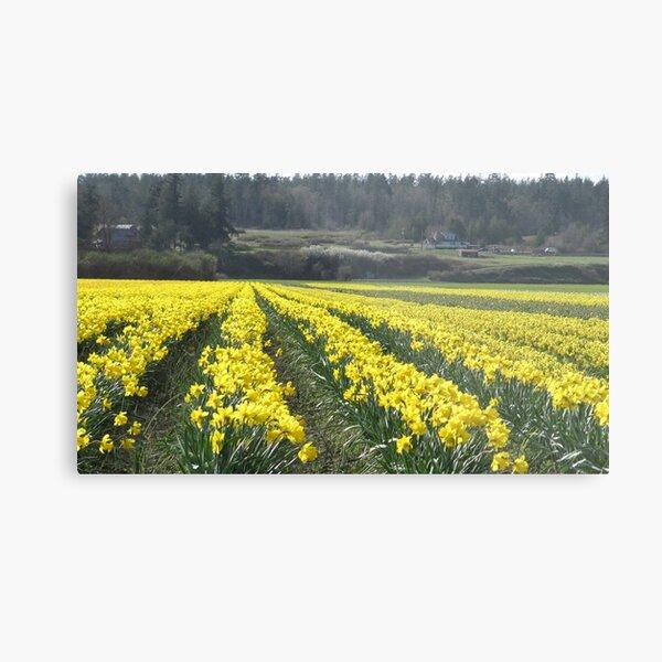 Easter Daffodils Metal Print