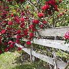 Tularosa Hedgerow by Mitchell Tillison