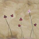 """""""Pretty Poppies"""" by bkm11"""
