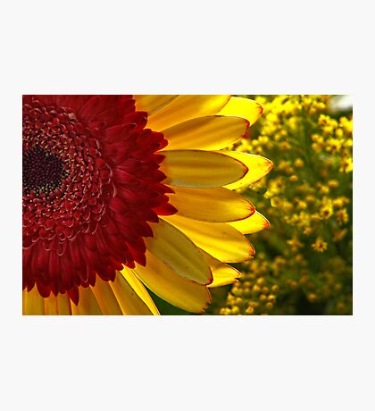 Bobs Funtime Flower Parade #1 Photographic Print