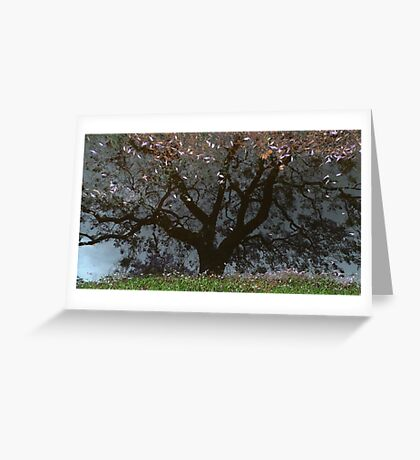 Grafton - after - the - rain Greeting Card