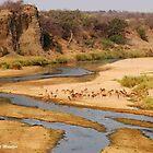 """Nature,Wildlife,Lanscape-capture - The Letaba River, """"KRUGER NATIONAL PARK"""" ,SOUTH AFRICA by Magriet Meintjes"""