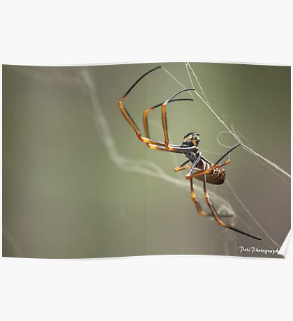 Spider at Work Poster