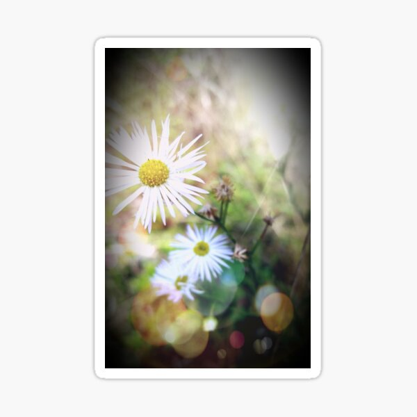 White Wildflowers Whispering in the Wind Sticker