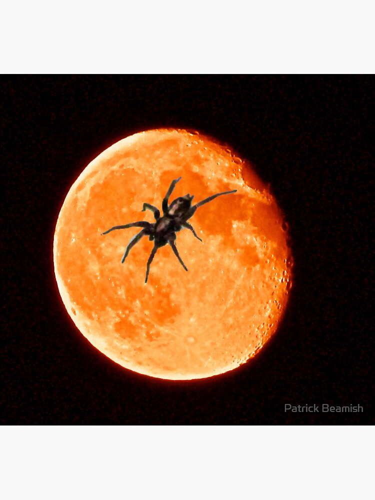 Spooky Spider On The Orange Moon by TrickyBeamy28