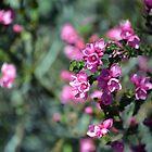 Australian Native Rose by Cloudlingpics