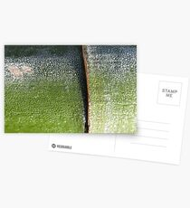Aurora bamboo Postcards