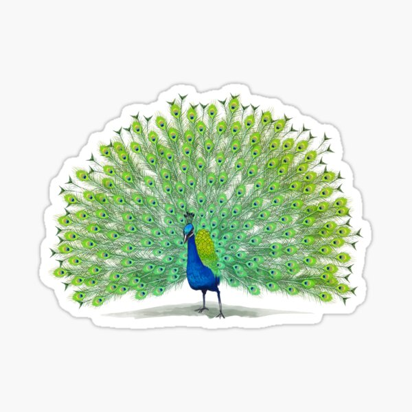 Colorful Peacock Painting Art Sticker