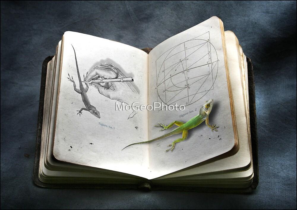 Evolution - No. 1 by MoGeoPhoto