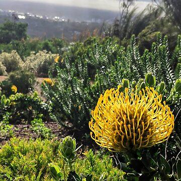 Yellow South African flower by 8kPzGZjJ20Rj