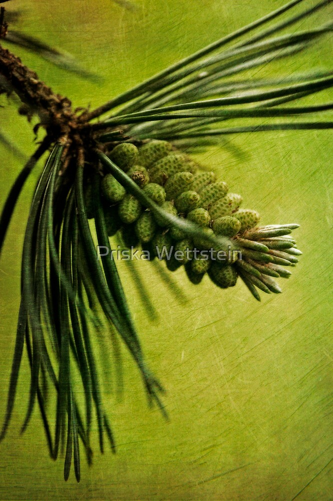 Evergreen by Priska Wettstein