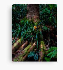 Kona Cloud Forest Sanctuary Canvas Print