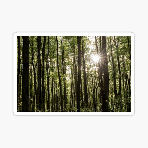 His Forest Sticker