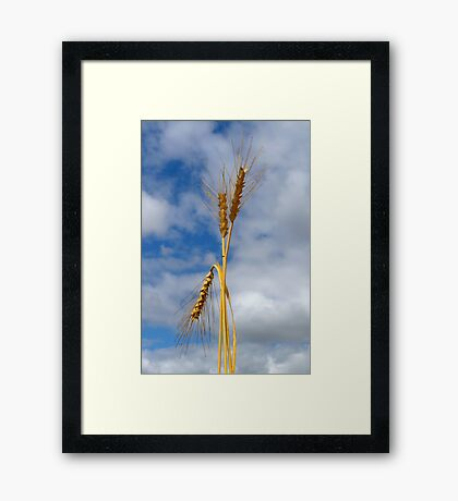 Wheat Stalk Statue Framed Print