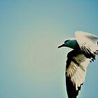 Bird by terrebo
