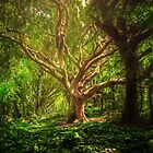 Forest  by AbirMohamad