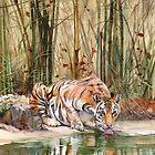 Dschungelgeist von Peter Williams