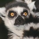 Ring-Tailed Lemur by WolfPause