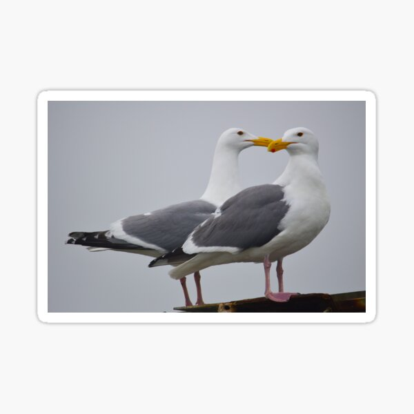 Seagull Friends Sticker