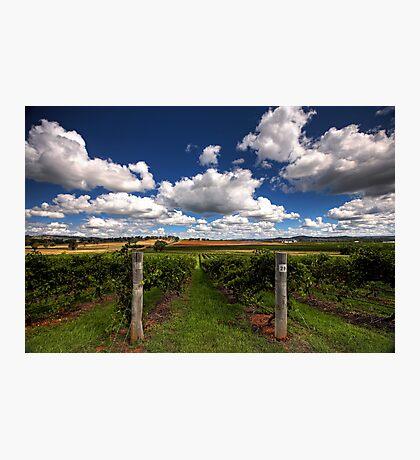 Mudgee Vineyards Photographic Print