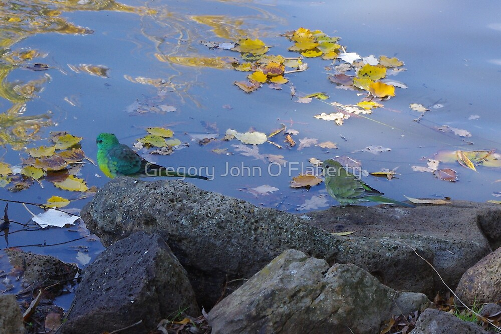 Green Grass Parrots by Gregory John O'Flaherty
