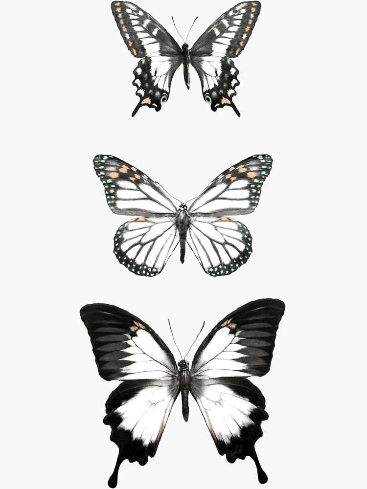 Butterflies // Align by AmyHamilton
