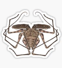 Amblypygi Sticker