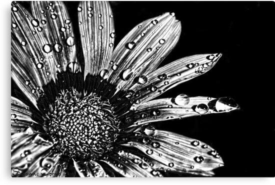 Darkness by Susanne Correa