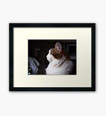 Gracie in Profile Framed Print