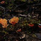 Orange Fungi and friends by michellerena