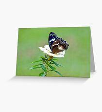 Hypolimnas bolina - common eggfly butterfly Greeting Card