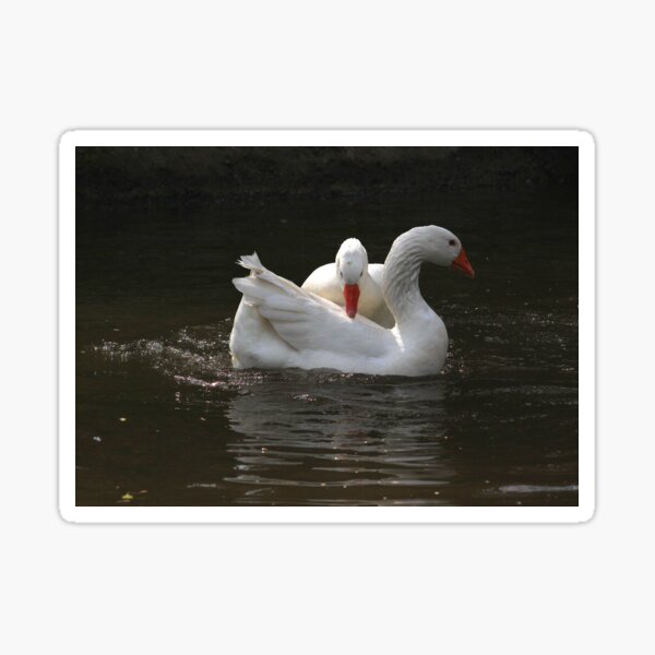 Goose couple Sticker