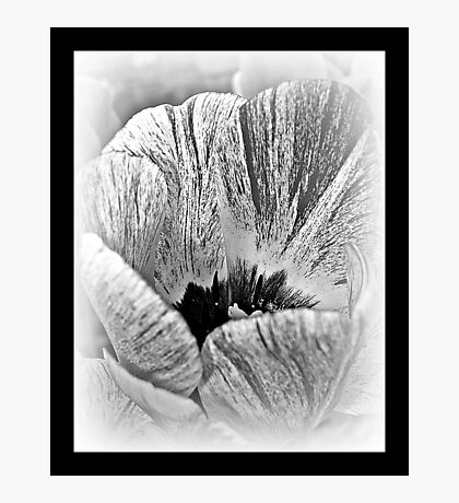 Black And White Tulip Photographic Print