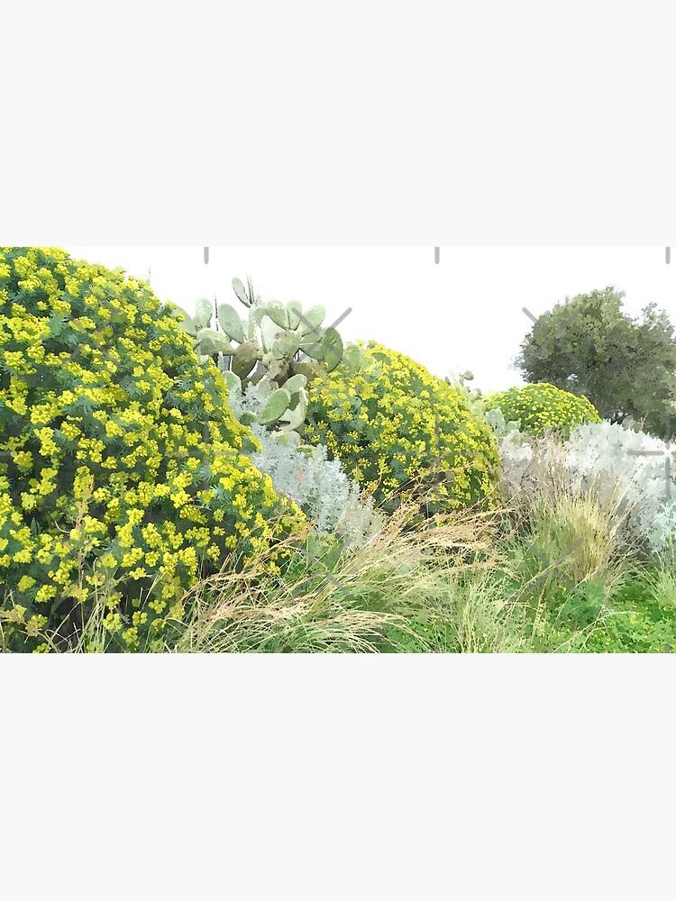Milazzo Blume von foxxya