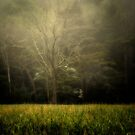 Tree in the Mist by KellyHeaton