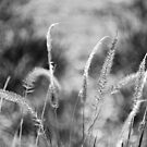Black and white grass by James  Kerr