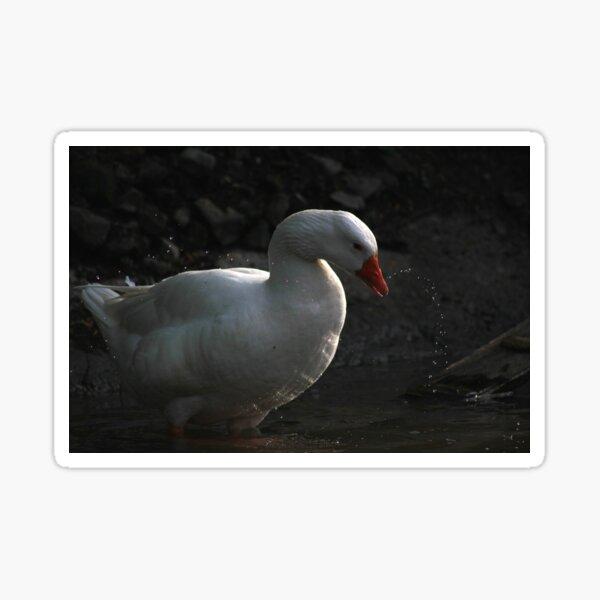 Goose wash Sticker