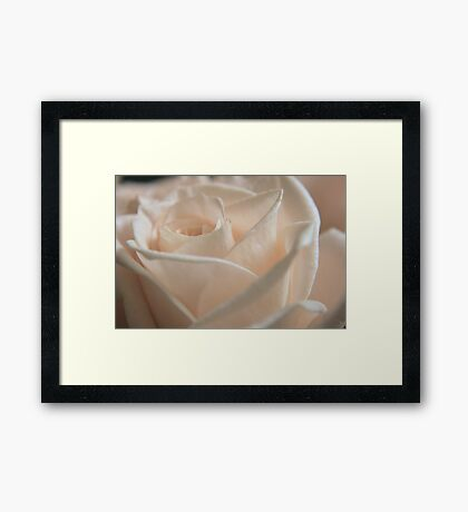 Light Rose Framed Print
